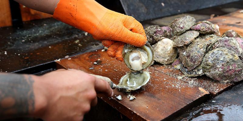2018 Oyster Season Begins In Bluff